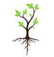 green tree with roots vector image vector image