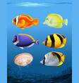 many fish underwater theme vector image
