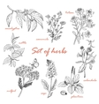 Set of isolated herbs in sketch style vector image vector image