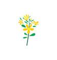 st johns wort herb plant logo icon design vector image