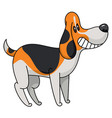 tricolor beagle-breed dog vector image