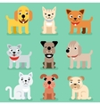 Puppy and kitten pet flat icons vector image