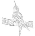 adult coloring bookpage a cute hummingbird on the vector image vector image