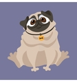 Cute Pug of a dog vector image vector image