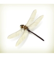 Dragonfly realistic vector image vector image