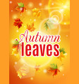 autumn maple leaves effect sun glow vector image vector image