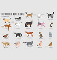 breed cats icons set cute animal vector image