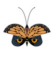 butterfly or owl vector image vector image