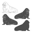 set black and white with walrus vector image