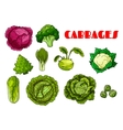 Vegetable cabbage isolated icons vector image vector image