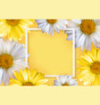 cute background with chamomile flowers can be vector image vector image