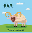 cute ram farm animal character farm animals vector image vector image