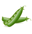 peas object vector image vector image