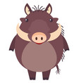 pumba on white background vector image vector image