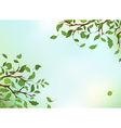 Branches leaves and sky vector image vector image