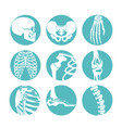 human anatomy orthopedic vector image
