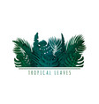 tropical palm leaves exotic leaves and plants vector image vector image