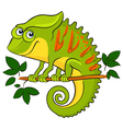Chameleon Cartoon african wild animal character vector image