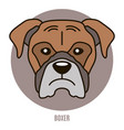 portrait of boxer vector image