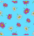 pyrethrum daisy seamless pattern on blue vector image