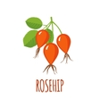 Rosehip icon in flat style on white background vector image vector image