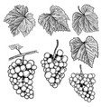 set of hand drawn grape design elements for vector image