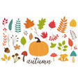 set of isolated autumn plants vector image vector image