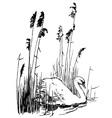 bird mute swan vector image vector image