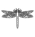 dragonfly isolated on white vector image vector image