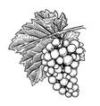 hand drawn grape design elements for poster menu vector image vector image