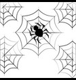 monochrome background halloween with spider vector image vector image