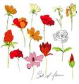 set of beautiful flowers vector image vector image
