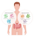 good bacteria and bad bacteria in human intestines vector image