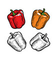 pepper culinary seasoning vegetables food vector image