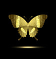 stylized golden butterfly vector image vector image