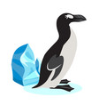 cute great auk icon black polar bird isolated on vector image vector image