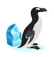 cute great auk icon black polar bird isolated vector image vector image