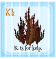 Flashcard letter K is for kelp vector image vector image