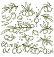 set of graphic olive branches vector image
