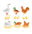 set of poultry chicken hen vector image vector image