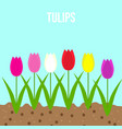 tulips set spring garden flowers vector image