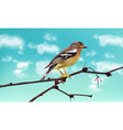 beautiful sparrow on a branch spring card vector image vector image