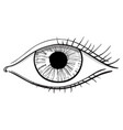 eye hand drawn doodle vector image vector image