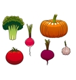 Fresh and ripe farm vegetables vector image vector image