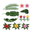 set leaves plants and tropical flowers vector image vector image