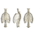 set with human ribcage and spine 3d front side vector image vector image