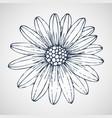 daisies hand drawn vector image vector image