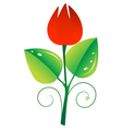 Red tulip vector image vector image