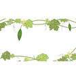 bitter melon with green leaf and flower on white vector image vector image