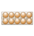 eggs in a packet vector image vector image
